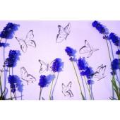 Kaart - Vlinders